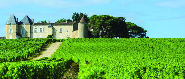 Vineyard and Chateau
